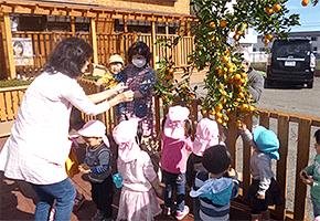 果物採集の写真